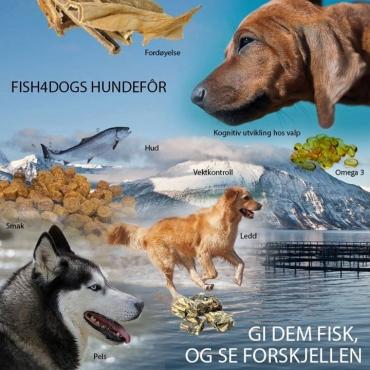 Fish4Dogs - Med fokus på hundens helse